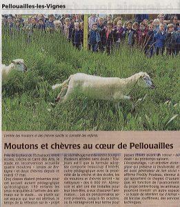 Eco Paturage Pellouaille les vignes